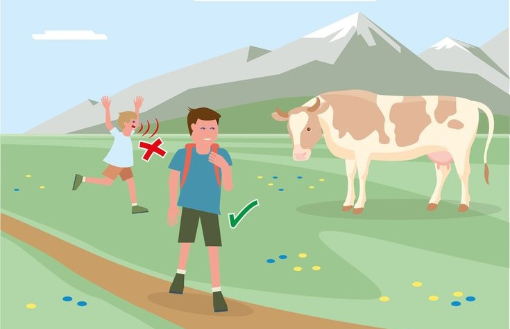 Safe mountain pastures - Rule 2 | ©  Federal Ministry for Sustainability and Tourism