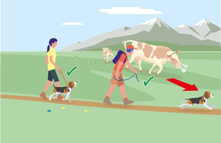 Safe mountain pastures - Rule 4 | ©  Federal Ministry for Sustainability and Tourism