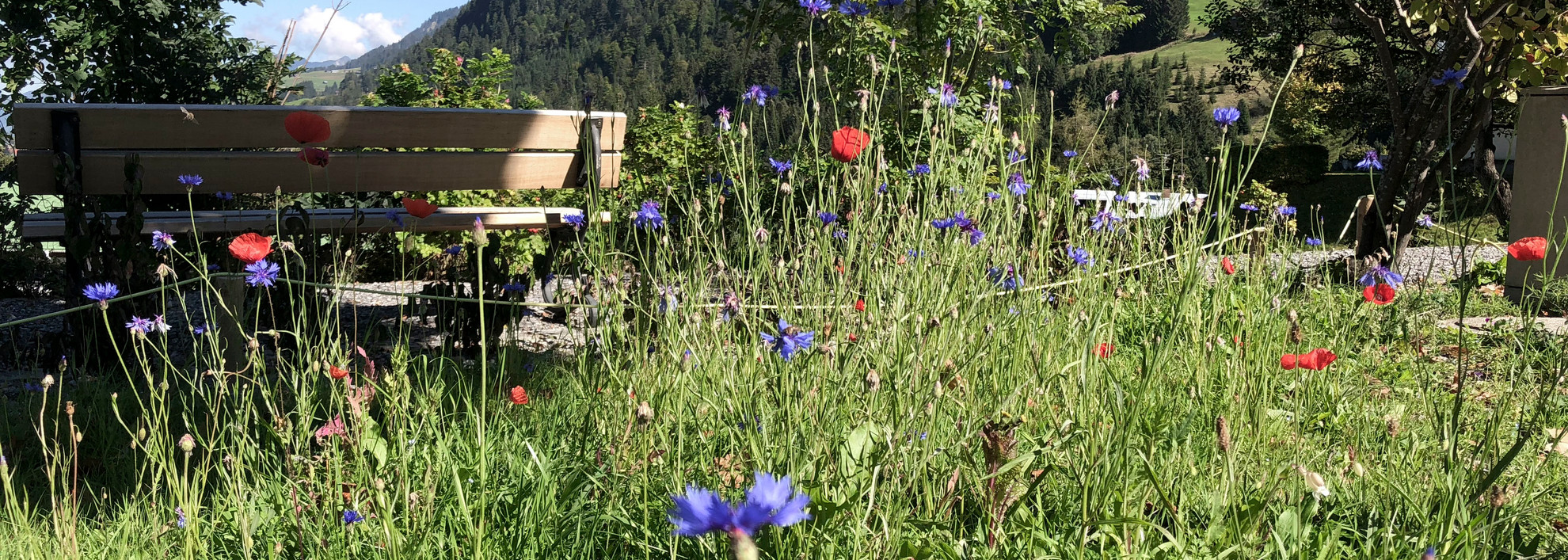 Blooming Garden in September 2018 | © Kleinwalsertal Tourismus eGen | Photographer: Louisa Hieke