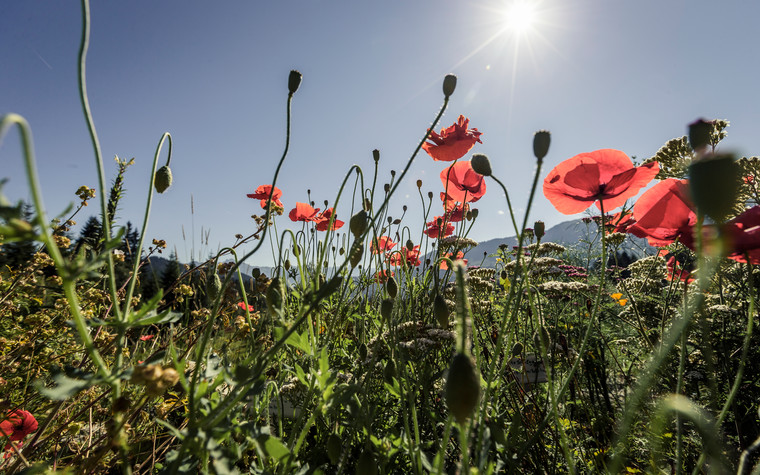 Flower meadow in Kleinwalsertal | © Kleinwalsertal Tourismus eGen | Photographer: Oliver Farys