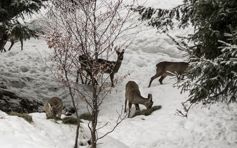 Wild foraging in winter | © Kleinwalsertal Tourismus eGen | Photographer: Andre Tappe