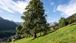 Panoramic view in Hirschegg | © Kleinwalsertal Tourismus eGen | Photographer: Dominik Berchtold