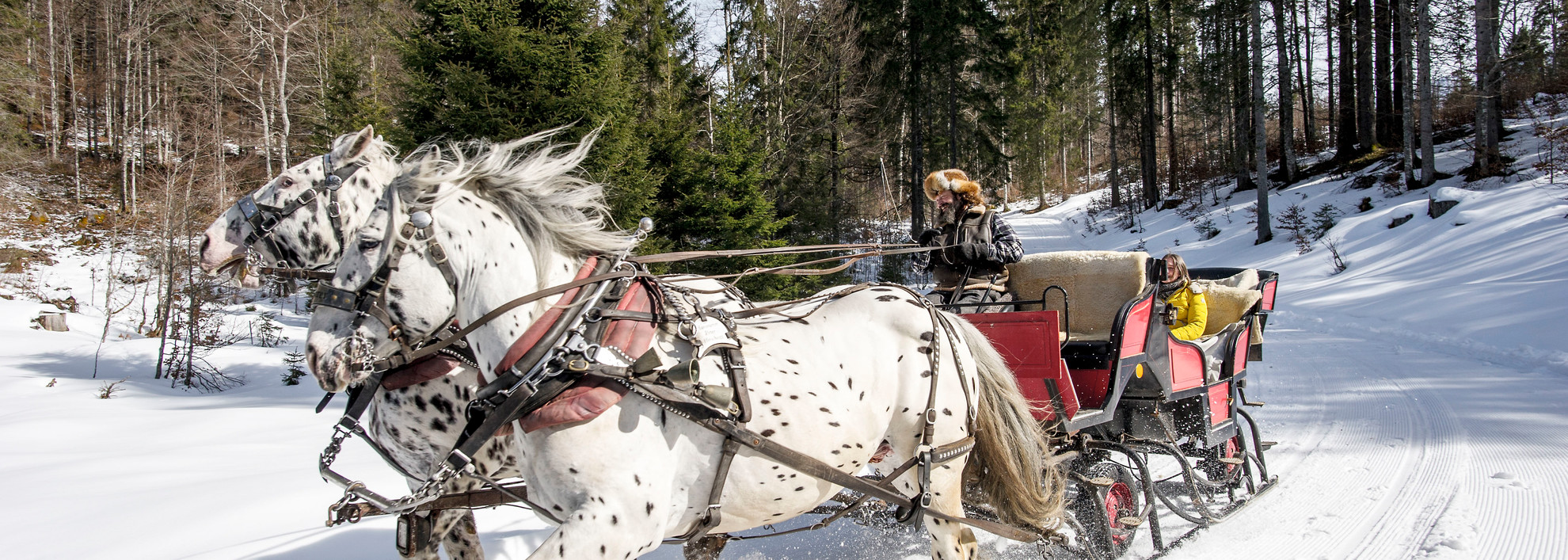 Peter Hammerer on sleigh ride | © Kleinwalsertal Tourismus eGen | Photographer: Dominik Berchtold