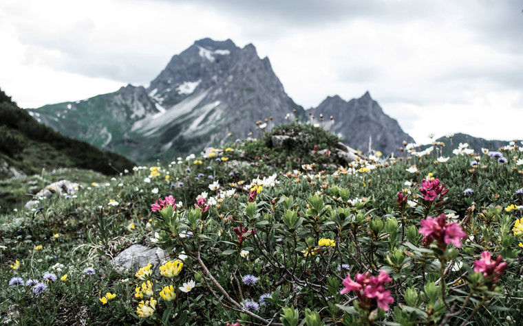 Flowers with view at Widderstein | © Kleinwalsertal Tourismus eGen | Photographer: Carolin Schratt