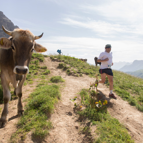 Cow at the Walser Trail Challenge | © Kleinwalsertal Tourismus eGen | Photographer: Dominik Berchtold