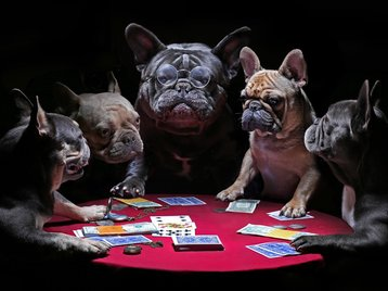French bulldogs playing cards_1141633661